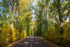 Дорога тоннеля с деревьями в autum стоковые изображения