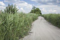 Дорога луга Стоковое Фото