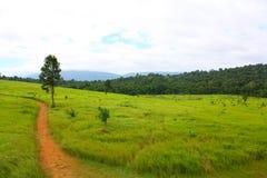 Дорога, луг, Таиланд Стоковые Изображения