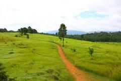Дорога, луг, Таиланд Стоковая Фотография RF