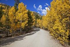 Дорога Управления лесным хозяйством выровнялась с валами Aspen Стоковое Изображение RF