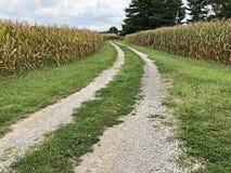 Дорога утеса между 2 кукурузными полями стоковые изображения