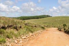 Дорога фермы с сосновым лесом Стоковое Изображение