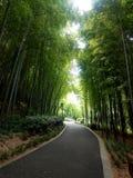 дорога через бамбуки стоковое изображение rf