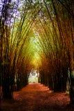 Дорога через бамбуковый лес и свет кончают конец тоннеля стоковое фото rf