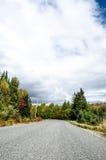 Дорога через древесины Стоковые Изображения