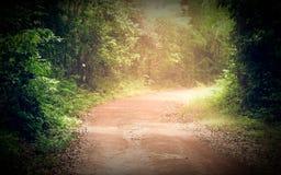 Дорога через лес в лете стоковая фотография