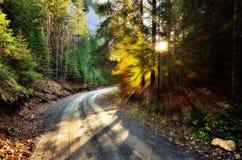 Дорога через лес ели Стоковое Изображение RF
