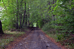 Дорога через лес Стоковая Фотография RF