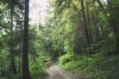 Дорога через загадочный русский лес Стоковая Фотография