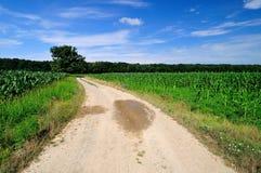 Дорога через зеленое кукурузное поле стоковые изображения rf