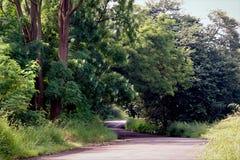 Дорога через изображение неизрасходованного запаса королевской власти леса Стоковое Фото