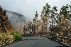 Дорога через, который сгорели лес Мадейры октября 2016 Стоковое Изображение RF