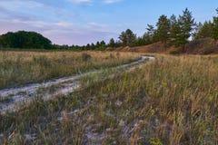Дорога через лес стоковое фото