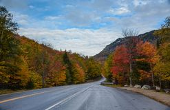 Дорога через парк стоковая фотография rf