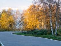 Дорога через парк Стоковая Фотография