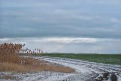 Дорога через поля зимы Стоковые Фотографии RF