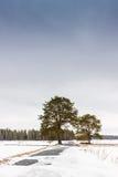 Дорога через поля Стоковые Фотографии RF