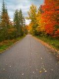 Дорога через пущу осени Стоковое Изображение RF