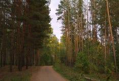 Дорога через пущу осени Стоковое Изображение