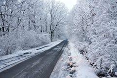 Дорога через пущу Стоковая Фотография RF