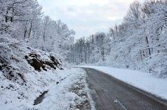 Дорога через пущу Стоковое Изображение