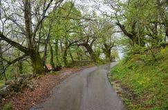 Дорога через рощу каштана Стоковое Фото