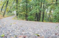 Дорога через туманный лес Стоковые Изображения RF