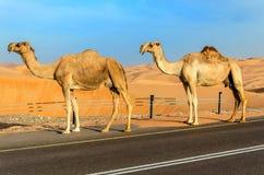 Дорога через дюны пустыни Стоковые Фотографии RF