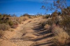 Дорога Backcountry в пустыне Стоковое фото RF