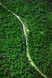дорога bush Стоковое фото RF