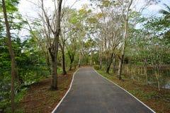 Дорога Bycicle в парке Стоковое Изображение