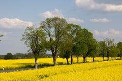 Дорога Coutry и желтые поля рапса Стоковое Изображение RF