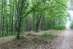 дорога mak koh пущи осень раньше стоковое изображение rf