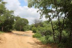 Дорога Sandy в африканском Bushveld Стоковые Фотографии RF