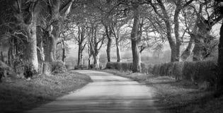 Дорога Scofield Стоковая Фотография