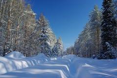 Дорога Snowy в пуще Стоковая Фотография