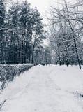 Дорога Snowy в древесинах Стоковые Изображения