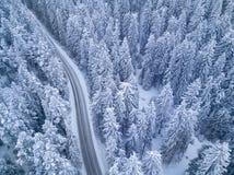Дорога Snowy в bird's ночи леса наблюдает взгляд стоковое изображение rf
