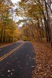 Дорога Treelinged Стоковое Изображение