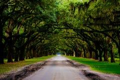 Дорога Wormsloe Стоковая Фотография