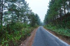 Дороги в лесе, ландшафт, природа клыка ` Doi Солнця Juh ` Таиланда, Чиангмая Стоковые Изображения