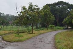 Дороги в лесе Стоковые Изображения