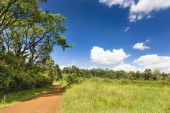 Дороги леса Karura, Найроби, Кения Стоковое Фото