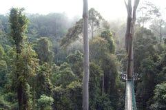 Дорожка Борнео сени долины Danum Стоковая Фотография RF