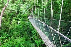 Дорожка Борнео сени Стоковое Фото