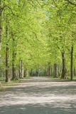 дорожка весны пейзажа Стоковое Изображение RF