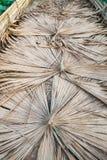 Дорожка выровнянная с листьями ладони Стоковое фото RF