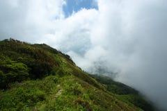 Дорожка в высокогорном злаковике стоковое фото rf