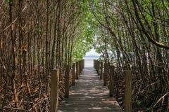 Дорожка в лесе мангровы, chantaburi, Таиланде Стоковая Фотография RF